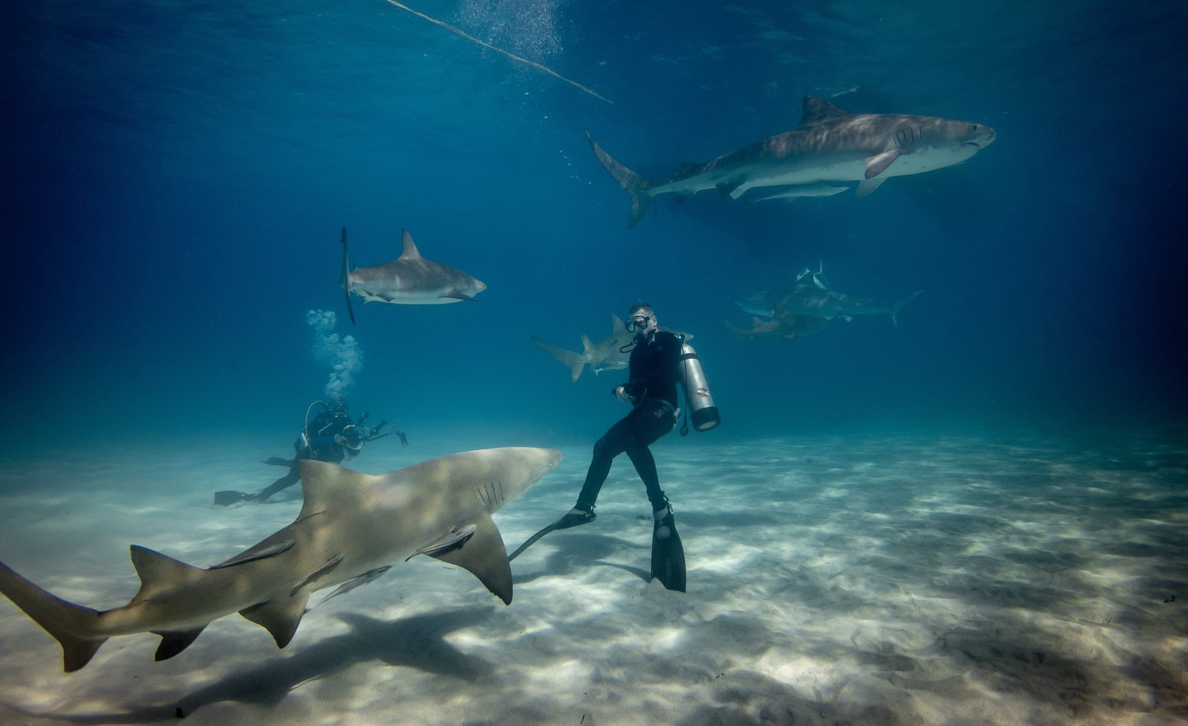 Divers swimming with sharks